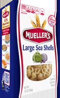 sea-shells-large